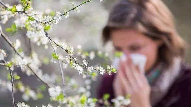 春暖花开,花粉过敏,鼻炎怎么破?(图)