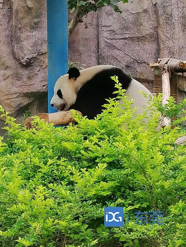 香市动物园欢乐不停