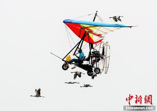 大雁在高空飞翔,人们坐着动力滑翔伞伴飞,画面太美了!
