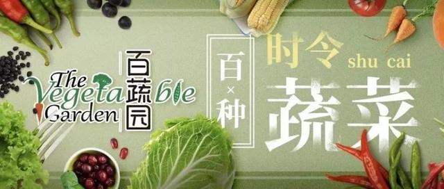 油麦菜图片鉴赏及资料简介_山草香