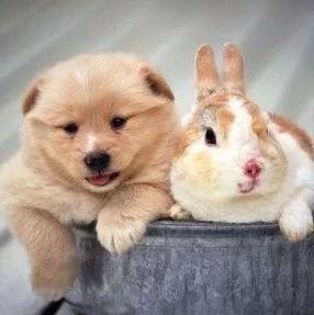 宠物狗狗图片品种大全