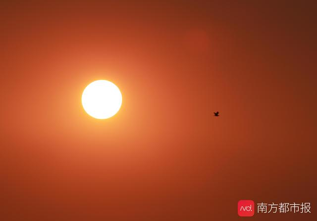 今年广州首个高温橙色预警!鸟儿逃避烈日,中午谨慎外出防烤焦