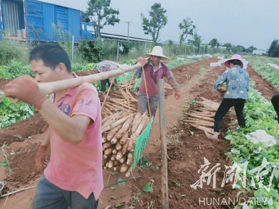 宁远县太平镇周书记照片
