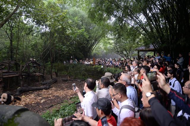 所有人!9月13日起,成都大熊猫基地周边交通有大调整