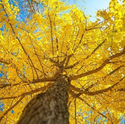飞流瀑布 潺潺溪水 满目红叶~深秋美如画