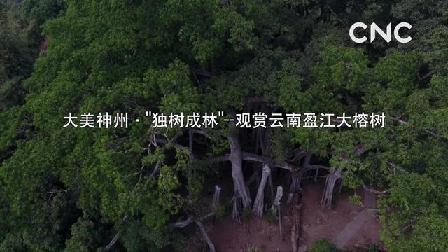 榕树图片 - 【花卉百科网】