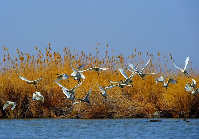 银川沙湖旅游景点图片