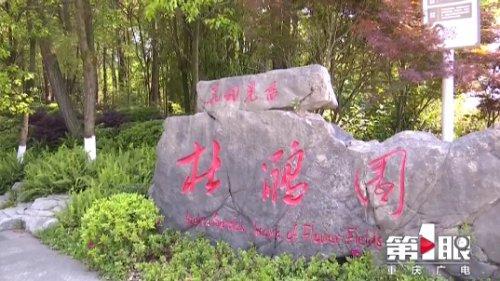 重庆铁山坪森林公园 -资料