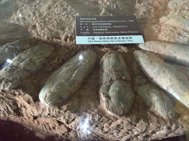 西峡恐龙遗迹园欢迎您_手机搜狐网