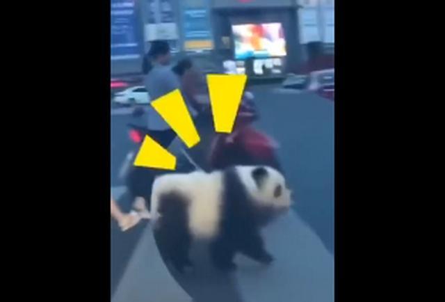 熊猫吃竹子图片简笔画