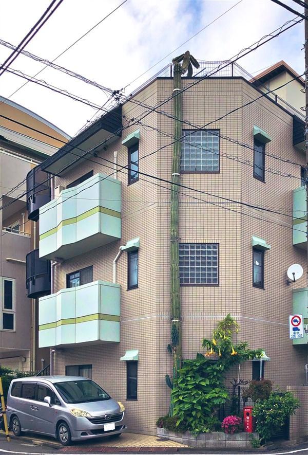 日本仙人掌暴长3层楼高 顶部长出奇葩人形 网友:它逃跑了