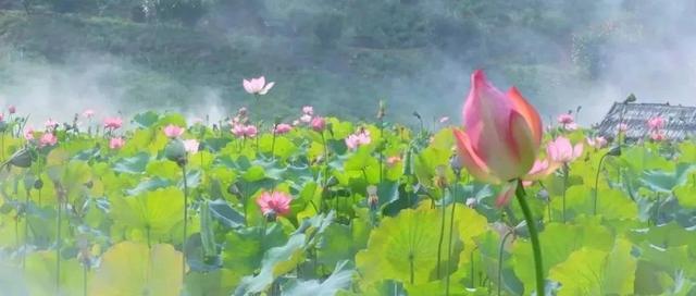 温岭锦屏公园
