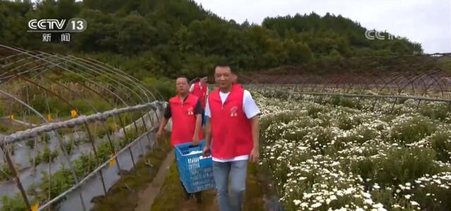 安徽黄山:洪水消退 农业生产自救逐步展开