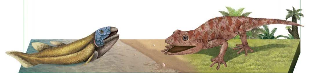 恐龙是怎么诞生:原始肺鱼登上陆地 双螈