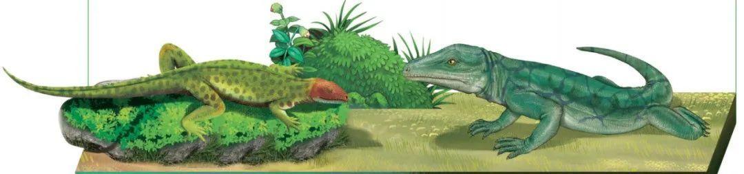 恐龙是怎么诞生的:早期爬行类林蜥 西洛仙蜥