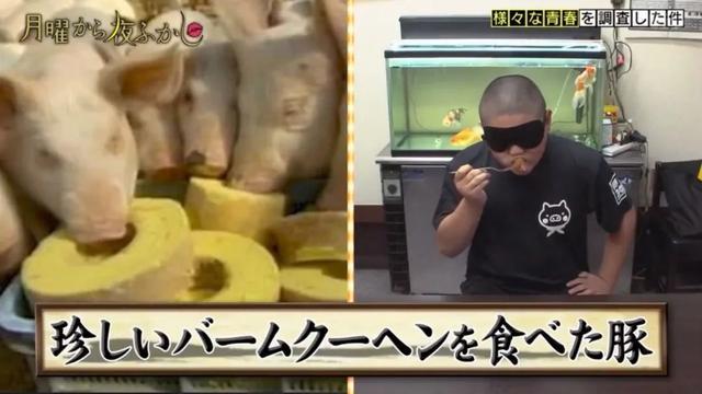 日本少年从小就跟猪生活,12岁时练成「神之舌」,一口就能尝出猪吃的什么饲料……