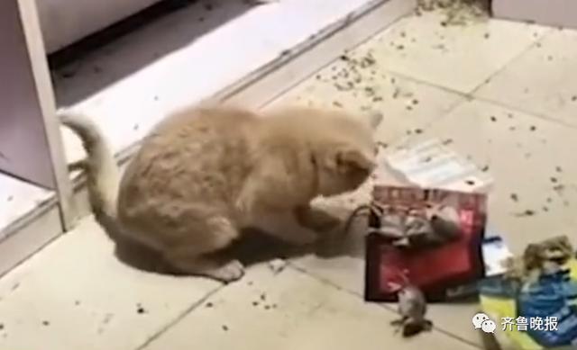 猫抓老鼠简笔画