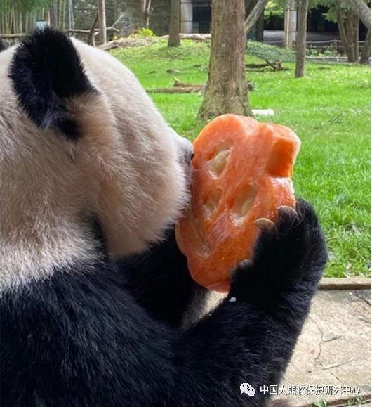熊猫头干饭了表情包