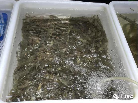 炸河虾图片大全大图