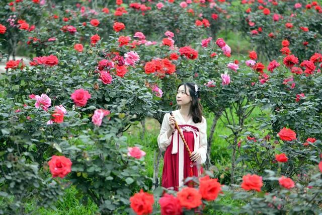 玫瑰花简笔画大全大图