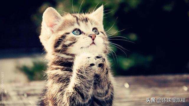 我的关键词 (诗与远方)生活短诗:我和一只小花猫的如果皖2005j201  新闻