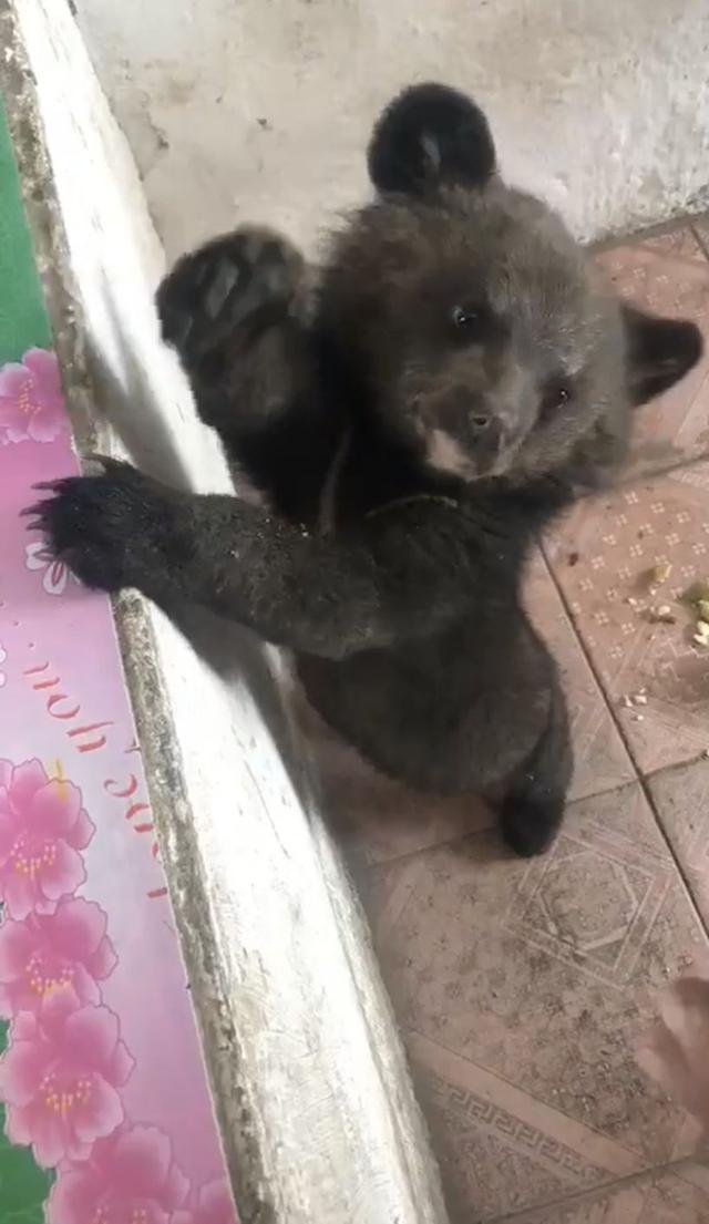 小黑熊表情包