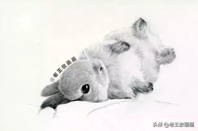 素描兔子是怎么画的_搜狗指南