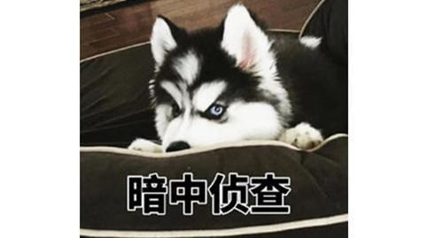 家里的狗狗得了真菌感染怎么办?【图】_东方头条