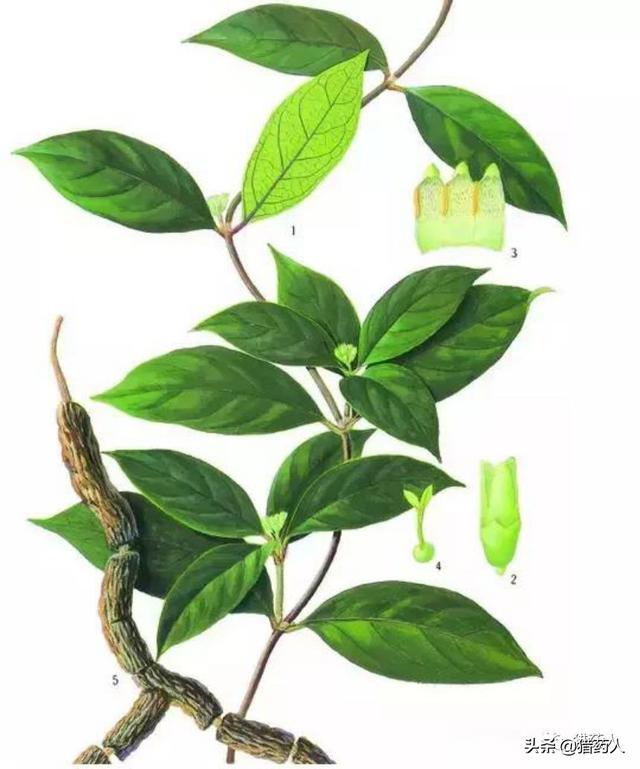 手绘风景图片 手绘植物图片 娟娟壁纸_娟娟壁纸手机版