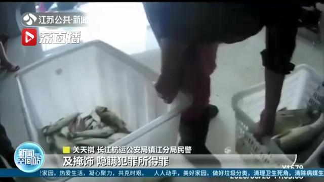 """一""""捕销收""""非法捕捞团伙被摧毁,7人被罚生态修复:33万尾花鲢鱼苗放流长江"""