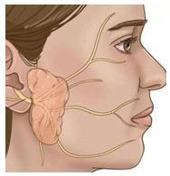什么是先天性耳前瘘管 - 健康一线