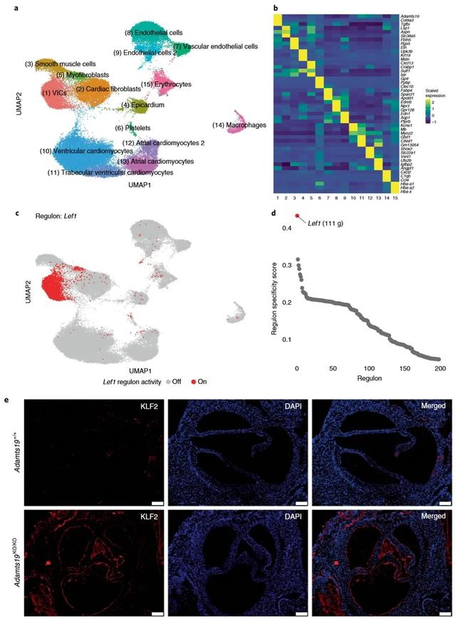 Nat Genet | 全外显子组测序助力心脏病新功能基因的发掘