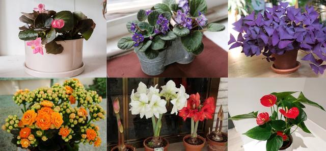 100种常见室内盆栽花卉图鉴,收起来慢慢看,喜欢什么咱就种什么