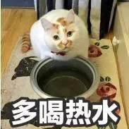 """夏天拍了拍你,知道如何拯救""""热到融化""""的猫咪吗?"""