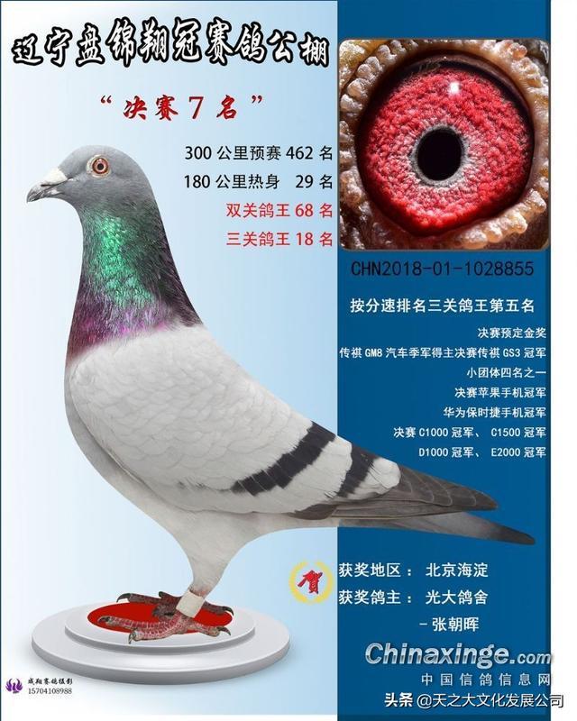 中国信鸽公棚建舍图