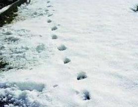英国德文郡魔鬼脚印之谜