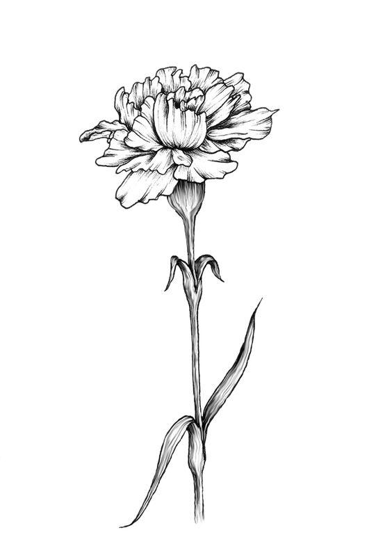 铅笔画花朵