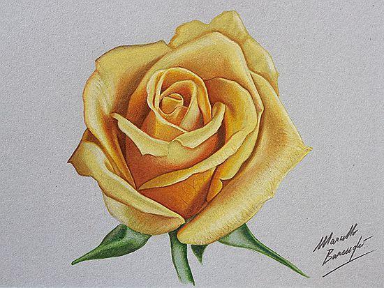 简单玫瑰花简笔画画法图片步骤🎬小小画家