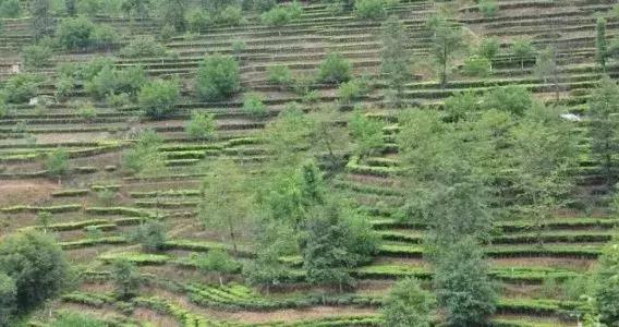 悠果观点:我对农业观光与观光农业的理解