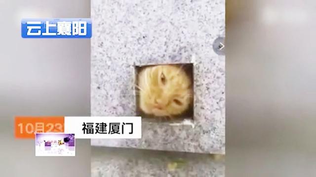 貓咪可愛圖片賣萌