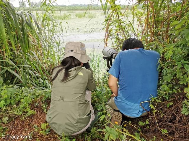 暴雨、泥泞、闷热,任何困难都阻挡不了我们观鸟的热情