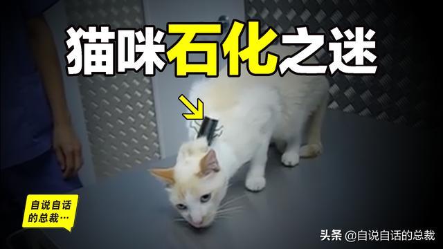 押尾猫视频23套