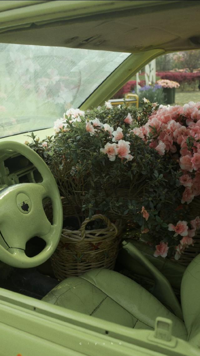 唯美花朵图片