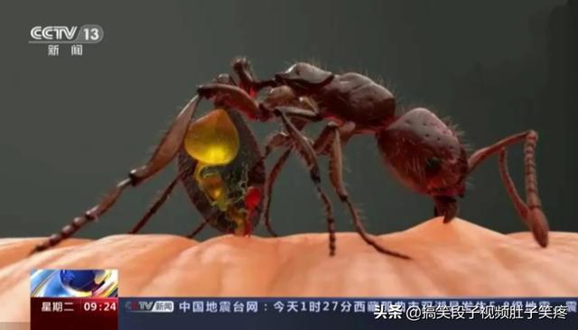 蚂蚁咬伤特效药