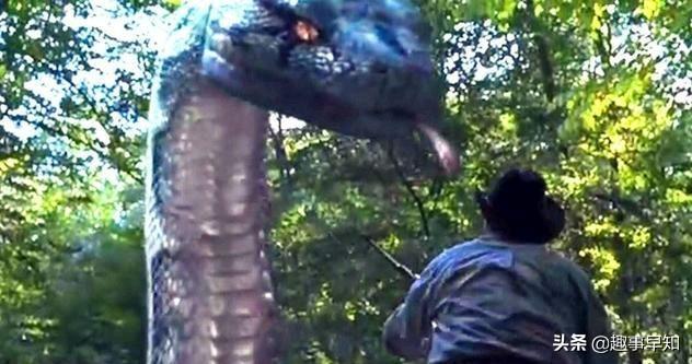 吃人的巨型绿森蚺,体型重迖200公斤