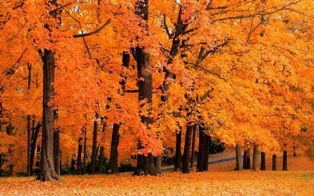 【秋韵青岛】深秋景色美如画,来世博园赴一场浪漫之约