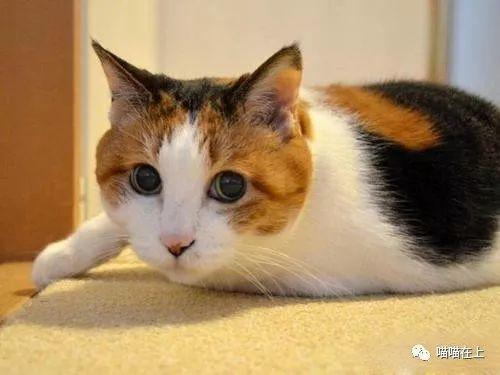 猫生病了怎么办?有哪些症状呢?