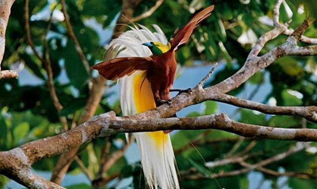 南方常见鸟类大全鸟名