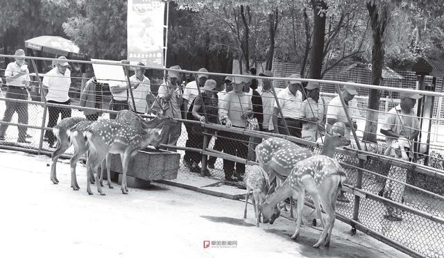 1953年,阜阳有了青颍公园...
