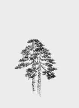 松树怎么画山水画